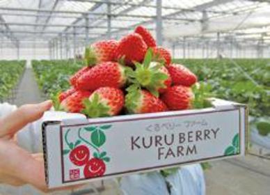 KURU BERRY FARM image