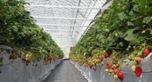 草莓与花田 志村农场 image