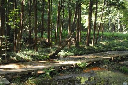 狭山丘陵(龙猫之森) image