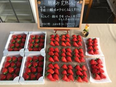 草莓市集 image