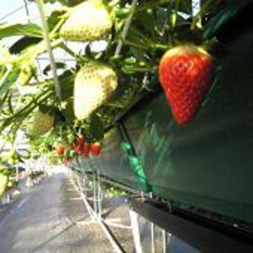莓之乡 西户店 image