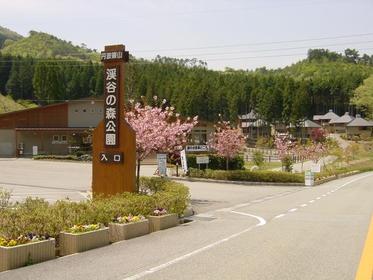 丹波篠山溪谷森林公園 露營場 image