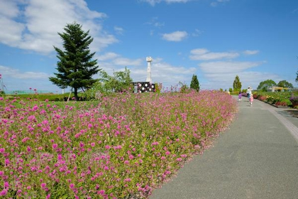 Sunflower Hill Park image