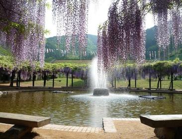 Shirai Oomachi Fuji Park image