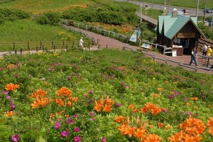 Koshimizu Primeval Flower Garden image
