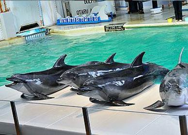 Otaru Aquarium image