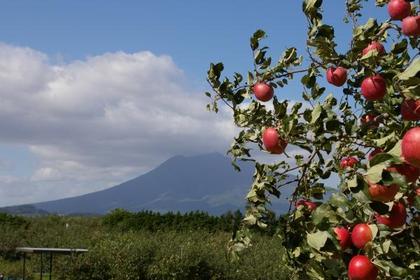 히로사키시 사과공원 image