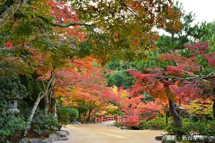 Momijidani Park image