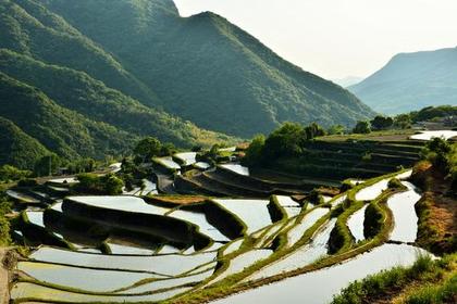 Senmaida Terraced Rice Fields, Nakayama image