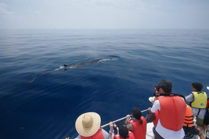 Ogata Whale Watching image
