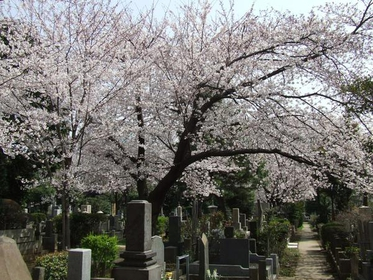 Aoyama Cemetery image