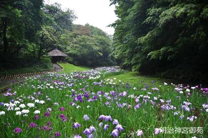 Meiji Jingu Gyoen (Meiji Jingu Gardens) image