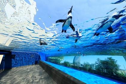 阳光水族馆 image