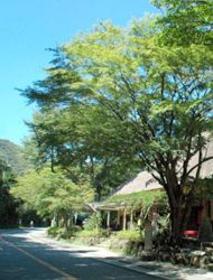 Amazake Chaya tea house image
