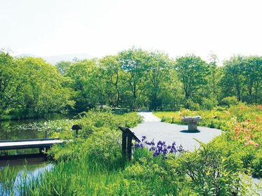 Hakone Botanical Garden of Wetlands image