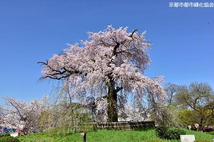 円山公園 image