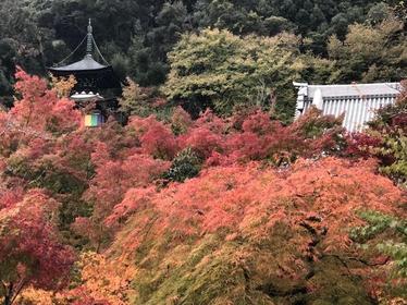 永観堂 禅林寺 image