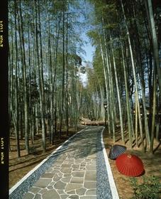 เส้นทางป่าไผ่จิคุรินโนโฉเค image