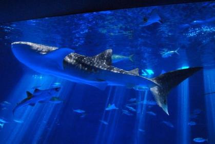 Io World Kagoshima City Aquarium image
