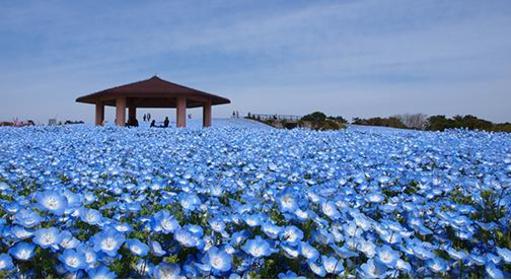 海中道海濱公園 image