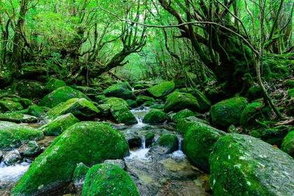 Shiratani Unsui-kyo Gorge image