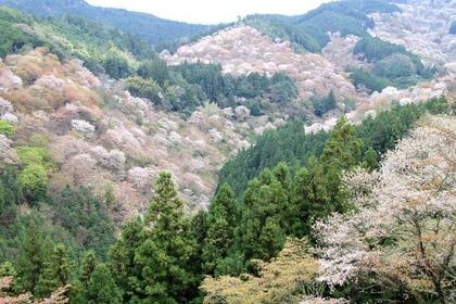 吉野熊野國立公園 image