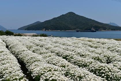 花卉公园浦岛 image