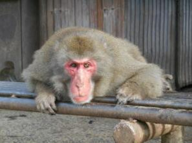 초시케이 자연 동물원 원숭이 왕국 image