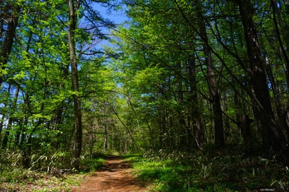 Shingen Bomichi Trail image