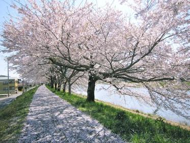一目千本桜 image