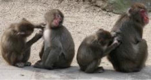 Takasakiyama Natural Zoological Garden image