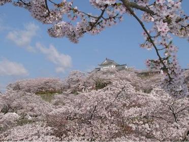 Tsuyama Castle (Kakuzan Park) image