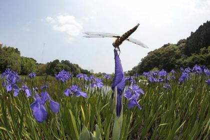トンボ自然公園 image