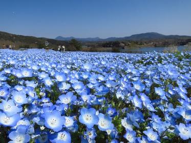 大分農業文化公園 image