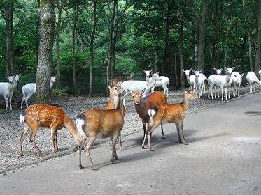 구주 자연 동물원 image