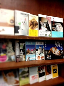 Jimbocho Nyankodo Books specializing in books about cats image