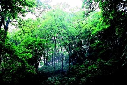大江山の森 image