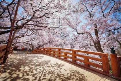 高远城遗迹(高远城址公园) image