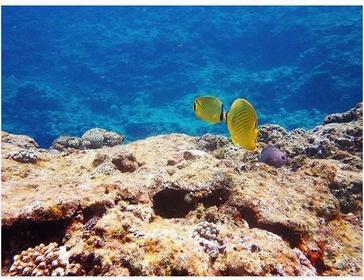 Marine Club UMI image