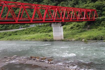 가와구치 야나(이비가와강) image