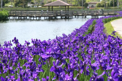 早水公園 image