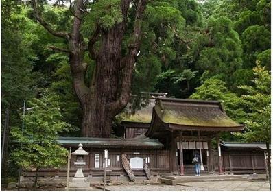 若狭一宮(若狭彦神社・若狭姫神社) image