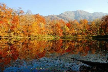 Karikomi Pond image