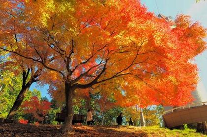 Mogamiyama Park (Momijiyama) image