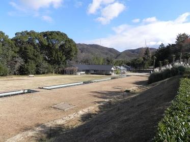 大阪市立大学理学部附属植物園 image