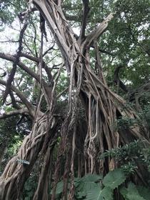志戶子榕樹公園 image
