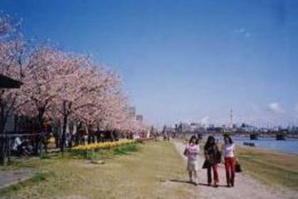 信濃川やすらぎ堤緑地 image