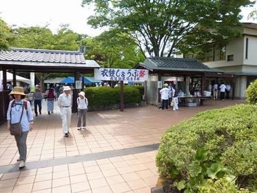 横須賀しょうぶ園 image