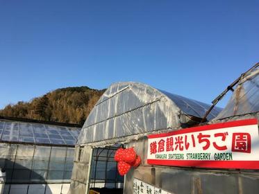 鎌倉観光いちご園 image