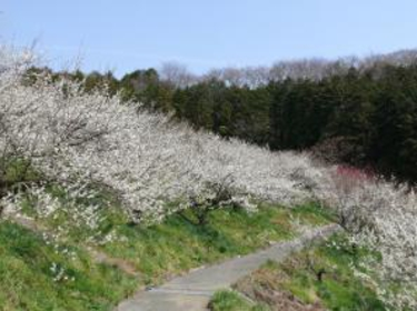 本沢梅園 image